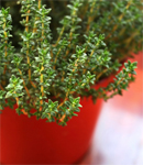 This Herb Could Take Down Acne
