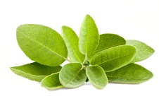Sage can be used as an herbal tonic to stave off memory problems.