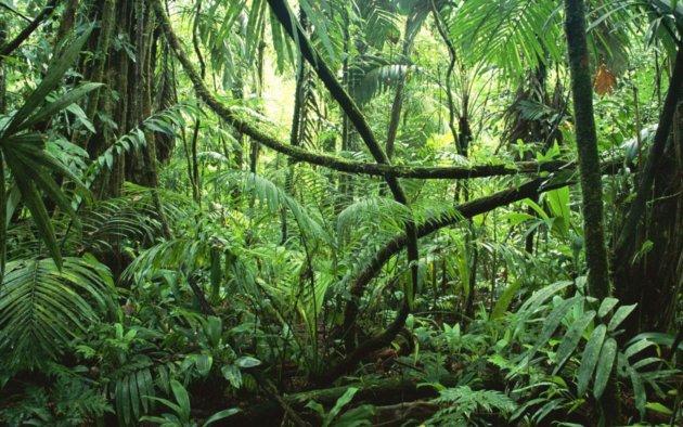 Amazonian Medicine