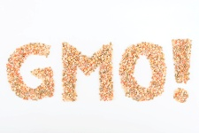 Genetically modified foods now make up a substantial percentage of the human diet.