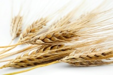 Barley, besides having a great taste, can help boost your health in a number of key areas.