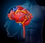 Can B-vitamins decrease your stroke risk?