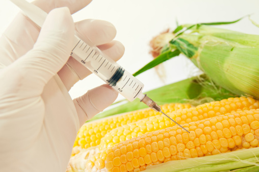 French Study Linking Monsanto Corn to Tumor Risk is Retracted
