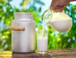Camel's Milk the Newest Superfood