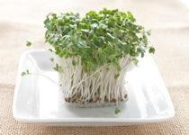 Broccoli Sprout Extract Improves Autism Symptoms
