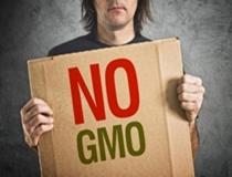 Harmful Effects of GMOs