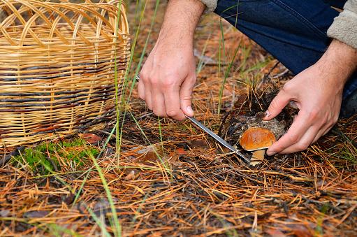 Wild Mushrooms Poisoning