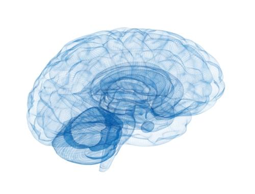 Brain of Athlete