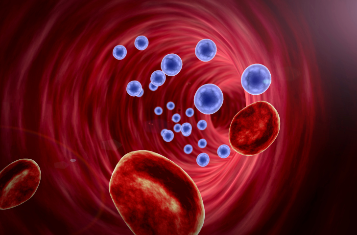Artificial Blood Vessel Coating