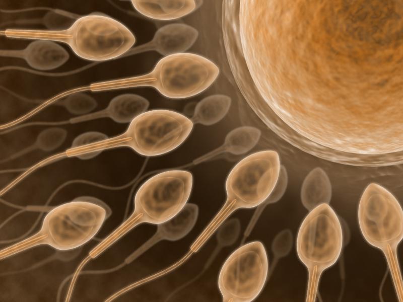 sperm bots