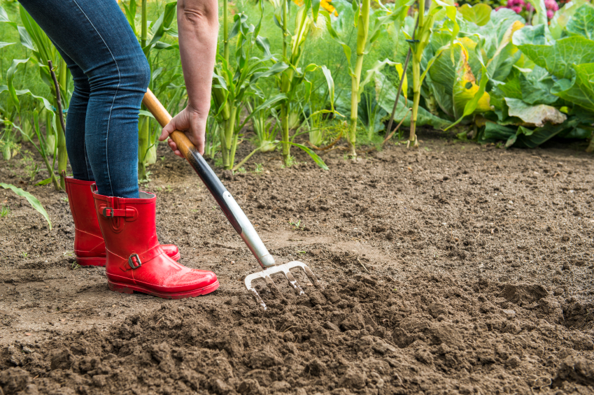 Is the Cure for Inflammation Buried in Your Yard?
