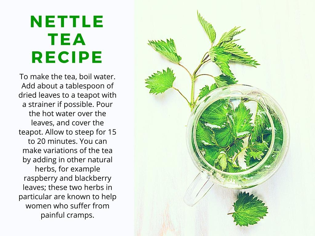 nettle tea recipe