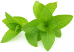 Peppermint oil is an effective natural remedy in the treatment of irritable bowel syndrome (IBS). The medicinal properties of peppermint oil. Peppermint oil can also be used to ease headache pain.
