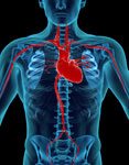 An In-depth Look at This Major Heart Cure