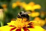 Beware of Bee Pollen!