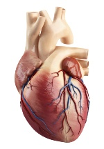 Impotence may signal heart disease.