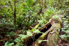 Six plants from the Amazon are found to be high in disease-preventing antioxidants.