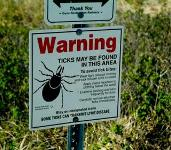 You Might Have Lyme Disease Without Knowing It