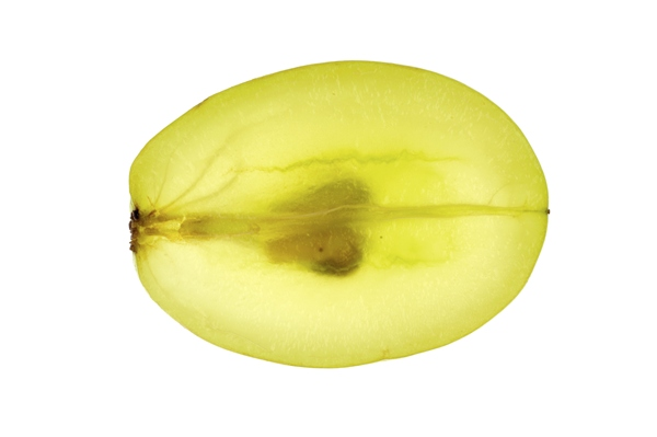 Compound in Grape Seed Extract Kills Prostate Cancer Cells