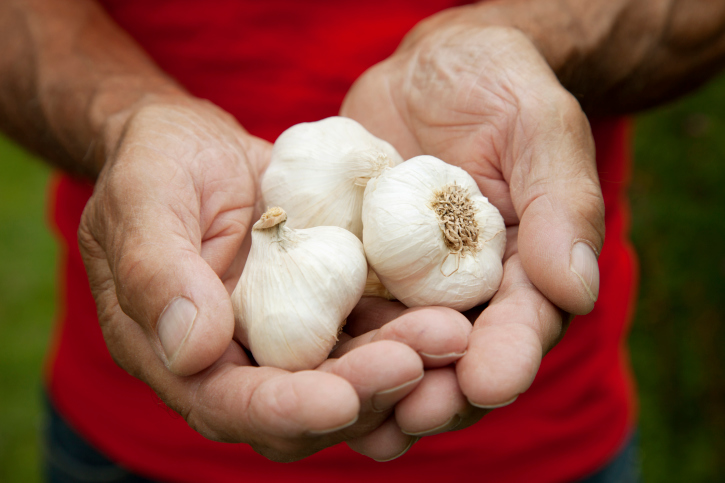 Grow Your Own Garlic for Better Health