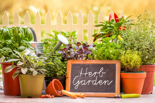 Anti-Aging Skin Care in an Herb Garden