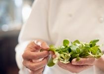 Watercress Next Top Food for Nutrition