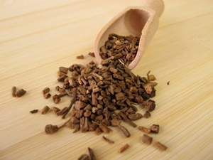 Healing Benefits of Osha Root