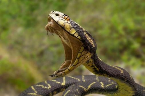 Snakebite Anti-Venom Shortage
