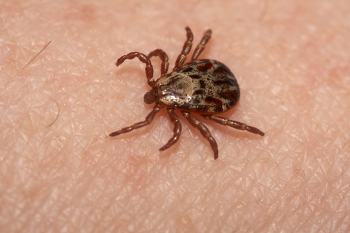 Migrating Ticks