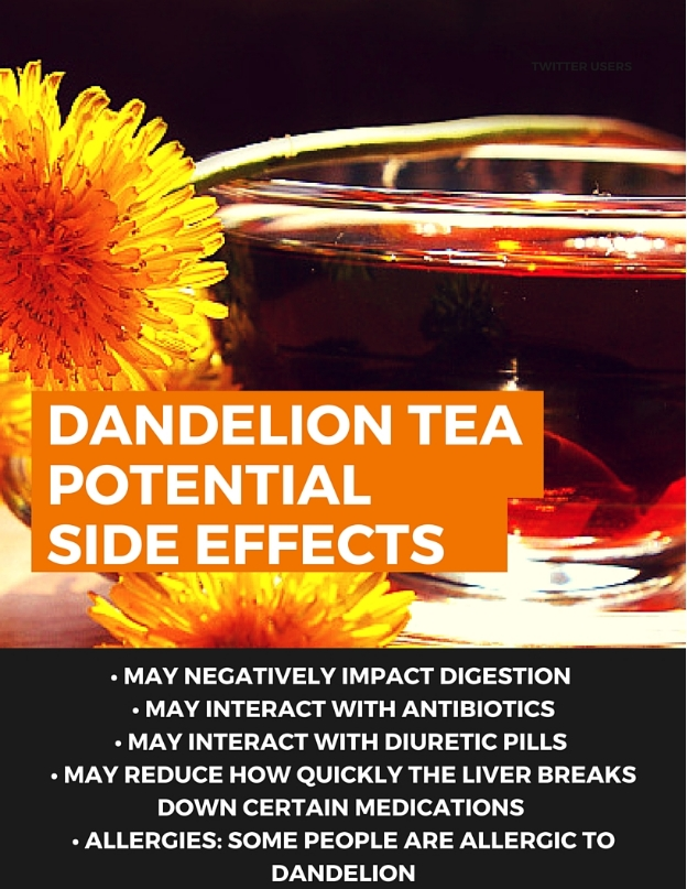Possible Side Effects of Dandelion Tea