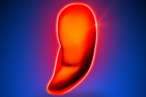 Enlarged Spleen Causes Symptoms Treatment And Home Remedies