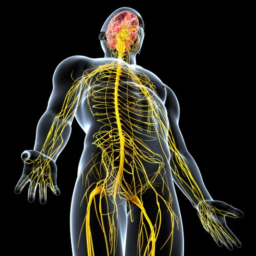 Nerve Damage Symptoms