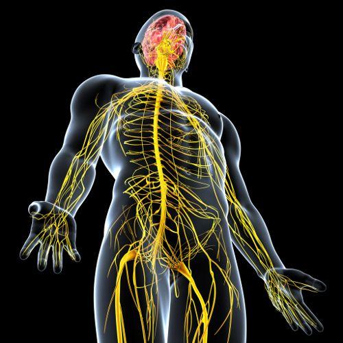 Natural Remedies For Nerve Damage